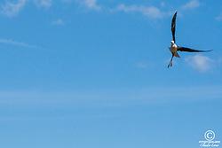 Foto: Claudio Lorai Meli- Fotostudiolabor®-2015 Foto di uccelli, fauna , natura Foto natura, oasi natualistica di molentargius