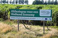 Nederland, Hoofddorp, 31-8-2016<br /> Olifantengras. Dit gras dat hier twee meter hoog staat geeft veel energie bij verbranden en wordt verbouwd om energie mee op te wekken. Biobased economie. <br />  <br /> Foto: (c) Michiel Wijnbergh