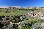 Dinosaur Provincial Park in an area known as the Badlands, Alberta, Canada.