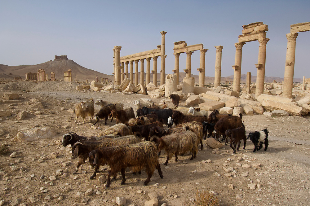 The ruins of the ancient city of Palmyra, once a thriving city.<br /> <br /> Contact:  John Ryan of ICARDA<br /> ICARDA, Tel Hadya, <br /> (963-21)2213433, Ext 741<br /> Home:  +9639 21 2662481<br /> j.ryan@cgiar.org