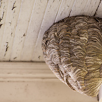 A wasp nest. All Content is Copyright of Kathie Fife Photography. Downloading, copying and using images without permission is a violation of Copyright.