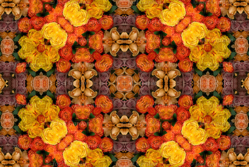 Photographic series of digital computer art.  Computer altered and manipulated creating an abstract distortion of close up of roses. <br />