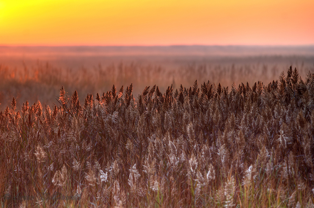 Glowing sunrise in Bombay Hook NWR, an HDR image.  I love how the simple comes alive with the sunlight.