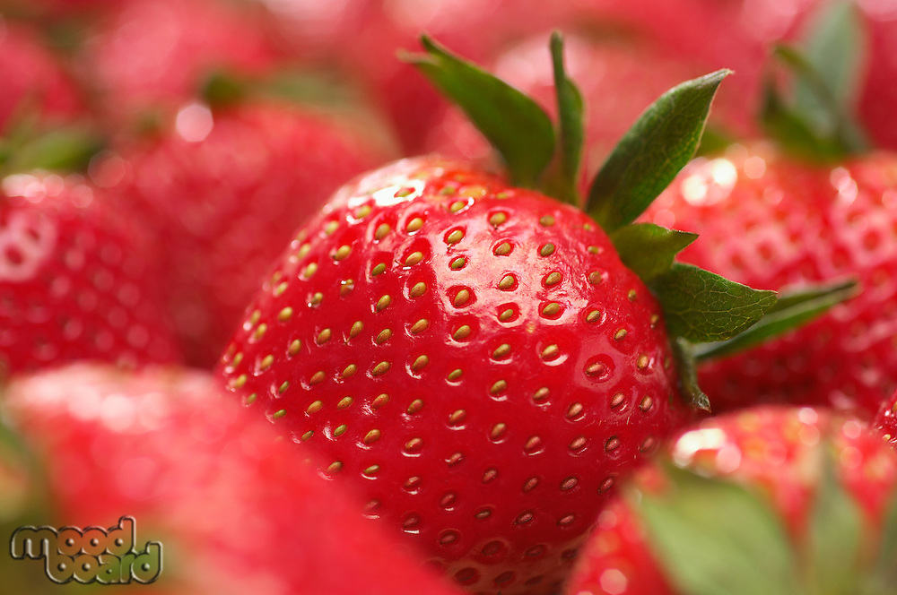 Strawberries, close-up
