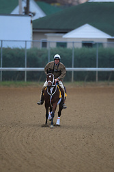 Morning workouts in preparation for Breeder's Cup 2011 at Churchill Downs in Louisville Thursday, Nov. 03, 2011. Photo by Jonathan Palmer