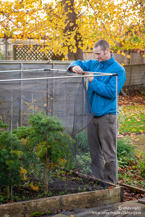 Putting up a netting cage around brassicas to protect from pigeons