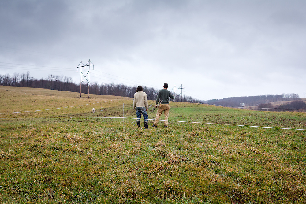 """Kate and Dan plan the lines of a new electric pen around their cattle. They move the cattle once a week to a new area of pasture, following a technique of """"farming good grass"""" promoted by Virginia-based farmer Joel Salatin, a guru of sustainable livestock management. Ideally, the Marsiglios would like to install an elegant system of permanent fences and gates for this purpose. For now, they can afford to use temporary solar-powered fencing."""