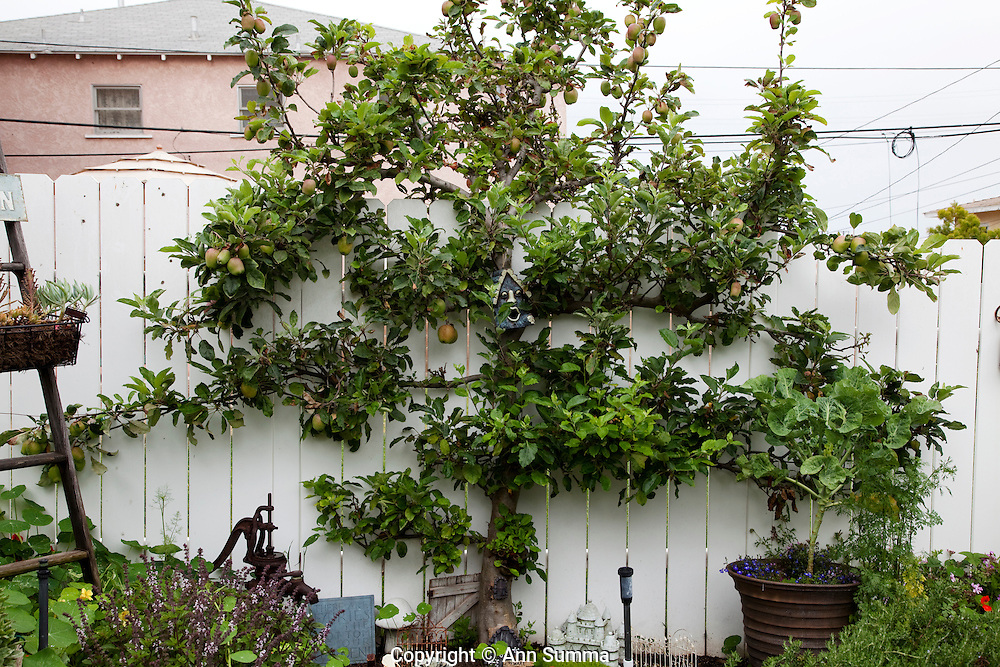 Los Angeles, California: Theresa Loe's garden in the El Segunda district of Los Angeles is a perfect blend of edibles, ornamentals, and kitsch (Photo: Ann Summa).