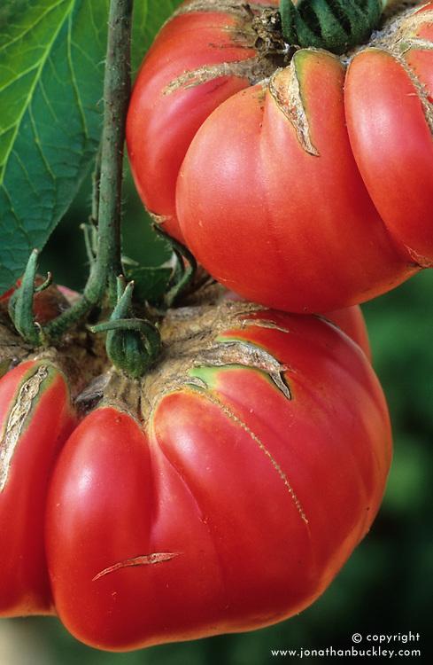 Tomato 'Brandywine'