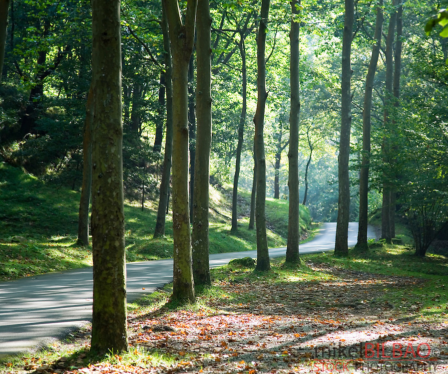 road and forest.<br />
