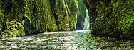 The lower portion of Oneonta Gorge is carpeted with moss and fern and sees direct light for less than an hour a day.
