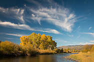 Cottonwood trees with autumn colors line the Yampa River, just outside Steamboat Springs, CO.