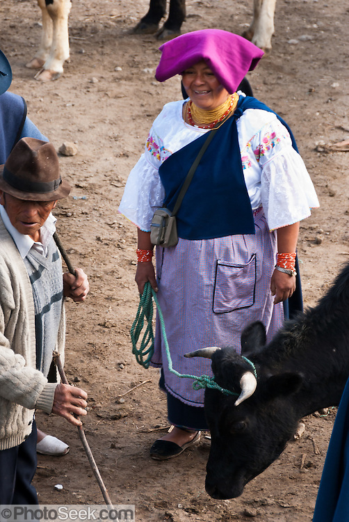 A woman with purple head covering sells a cow at the bustling Saturday animal market in Otavalo, Ecuador, South America. The culturally vibrant town of Otavalo attracts many tourists to a valley of the Imbabura Province of Ecuador, surrounded by the peaks of Imbabura 4,610m, Cotacachi 4,995m, and Mojanda volcanoes. The indigenous Otavaleños are famous for weaving textiles, usually made of wool, which are sold at the famous Saturday market and smaller markets during the rest of the week. The Plaza del Ponchos and many shops tantalize buyers with a wide array of handicrafts. Nearby villages and towns are also famous for particular crafts: Cotacachi, the center of Ecuador's leather industry, is known for its polished calf skins; and San Antonio specializes in wood carving of statues, picture frames and furniture. Otavaliña women traditionally wear distinctive white embroidered blouses, with flared lace sleeves, and black or dark over skirts, with cream or white under skirts. Long hair is tied back with a 3cm band of woven multi colored material, often matching the band which is wound several times around their waists. They usually have many strings of gold beads around their necks, and matching tightly wound long strings of coral beads around each wrist. Men wear white trousers, and dark blue ponchos. Otavalo is also known for its Inca-influenced traditional music (sometimes known as Andean New Age) and musicians who travel around the world.