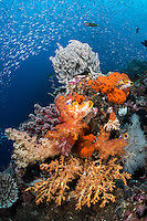 Sardines, Feather Stars, Soft Corals and Sponges<br /> <br /> Shot in Raja Ampat Marine Protected Area West Papua Province, Indonesia