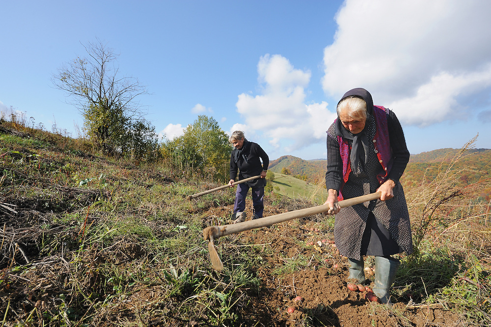 Traditional field work, near Zarnesti, Transylvania, Southern Carpathians, Romania