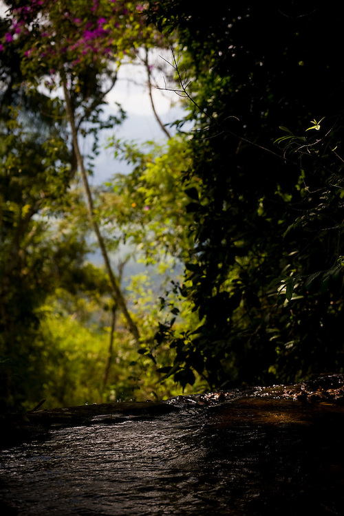 Manhumirim_MG, Brasil...Trilha no Parque do Sagui em Manhumirim...The trail in the Sagui Park in Manhumirim...Foto: BRUNO MAGALHAES / NITRO