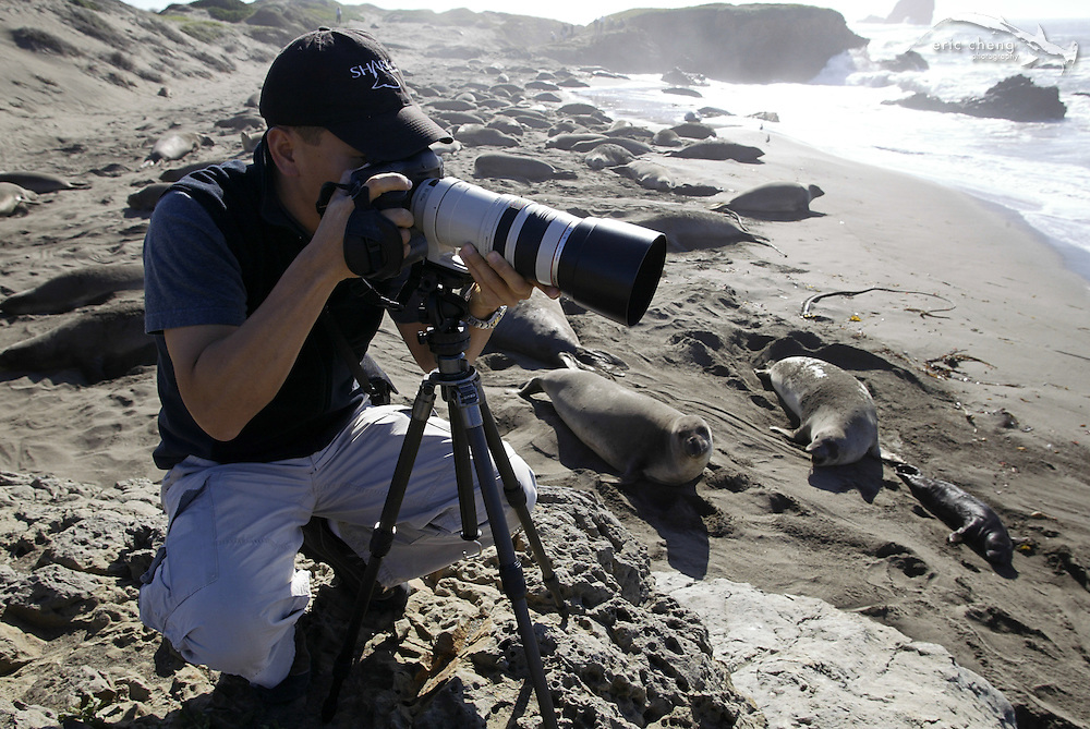 Eric Cheng photographs elephant seals