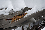 close up of snow covered log in Colorado
