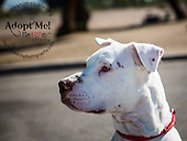 PACC dogs 11-20-14