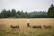 Idaho Pasture/Tamworth cross
