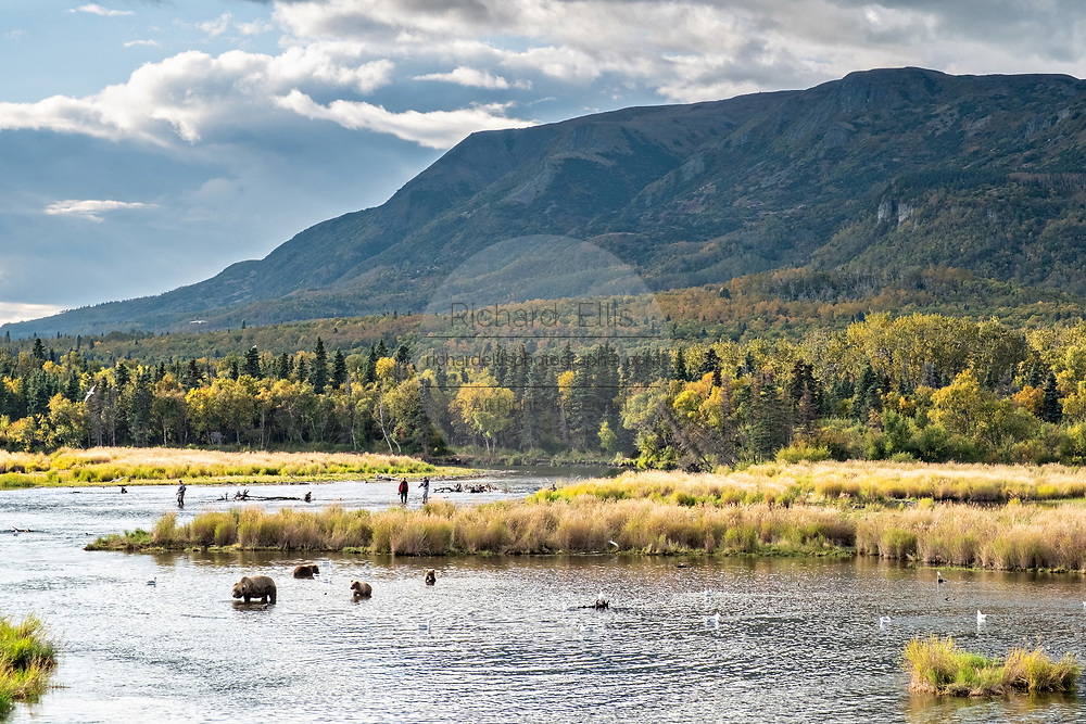 Fly fishermen along the lower Brooks River with Dumpling Mountain behind in Katmai National Park and Preserve September 16, 2019 near King Salmon, Alaska. The park spans the worlds largest salmon run with nearly 62 million salmon migrating through the streams which feeds some of the largest bears in the world.