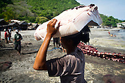 A woman carrying a large piece of whale skin for though in his home. every woman in Lamalera village used to carry the load of fish by placing it on their heads. Residents in the lamalera village, Indonesia cathing  sperm whales with traditional method to provide meals for the entire village and part of the Lembata island where the village is located..