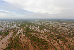The Fitzroy River in flood near Willare.