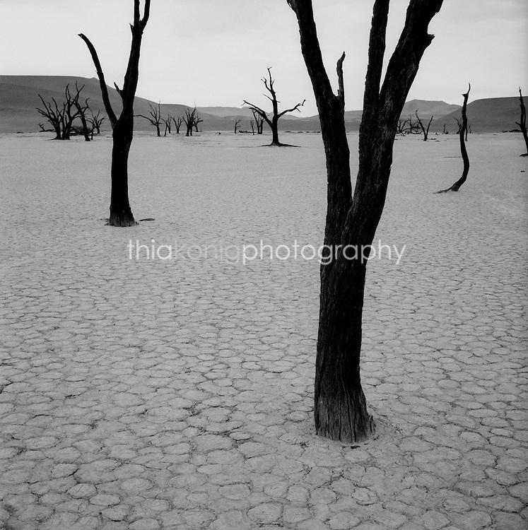 Black and white image of dead bristlecone pine tree at Dead Vlei, Sossusvlei, Namib desert, Namibia, Africa