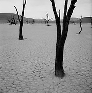 Black and white image of dead bristlecone pine tree at Dead Vlei, Sossusvlei, Namib desert, Namibia, Africa