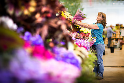 © Licensed to London News Pictures. 15/09/2016. Harrogate UK. An exhibitor puts the finishing touches to her display at this years Harrogate Flower show that starts tomorrow. Photo credit: Andrew McCaren/LNP