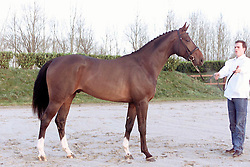 N¡18 Regino Adelheid (Animo x Rebel II Z)<br />