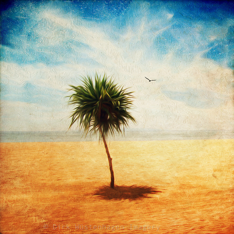 Single small dracaena tree on a beach. Texturized and manipulated photograph.<br />
