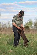 John Zeman works his 13 week old GSP puppies on live birds.