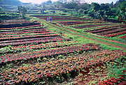 Herb and vegatable farm, Island of Hawaii<br />
