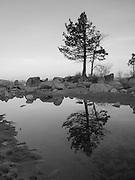 Lone evergreen