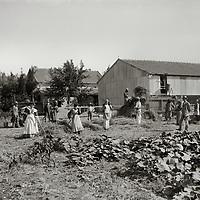 Agricultural Settlements