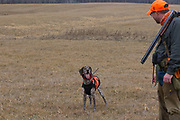 Bob St. Pierre takes moment to praise his GSP, Tram, while hunting pheasants on a Minnesota public hunting area.