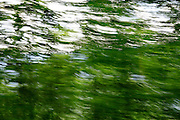 Lush green trees with motion blur