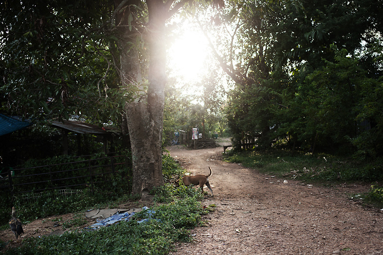 View of Samphu village, near Pak Ok, where the first case of surrogacy was recorded.<br /> Lom Sak, Petchabun province, Thailand. Aug 24 2014<br /> Credit : Giorgio Taraschi for The New York Times