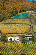 Weinberge, Weingut Klaus Zimmerling, Pillnitz, Sächsische Schweiz, Elbsandsteingebirge, Sachsen, Deutschland | vineyards, winery Klaus Zimmerling, Pillnitz, Saxon Switzerland, Saxony, Germany