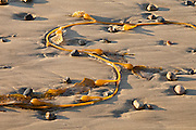 Kelp and Rocks on the Beach
