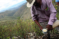 A coca farmer pours a glass of chica, a fermented corn drink, during a rest in a coca field in El Rosario, Nariño, in southwestern Colombia, on July 15, 2008. Nariño is a one of Colombia's most troubled departments; with wide spread coca cultivation and the presence of illegal armed groups vying for control of the coca business. (Photo/Scott Dalton)