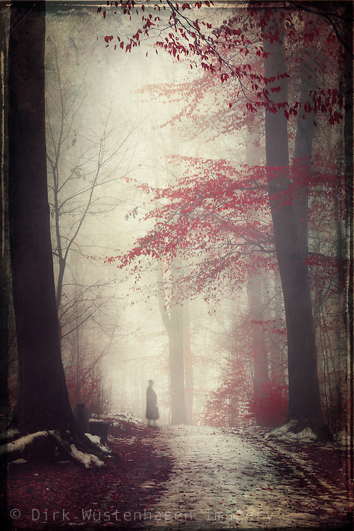 Forest on a misty winter day - textured photograph