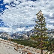 Jeffrey Pine Tenaya Lake Basin - Big Sky Clouds Olmstead Point - Yosemite - HDR