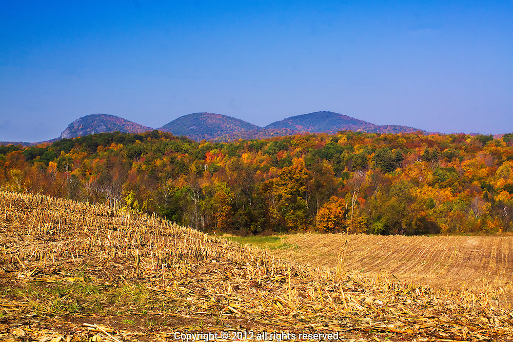 FALL AFTER THE CORN HARVEST,HAYSTACK MT IN THE BACKGROUND, PAWLET, VT