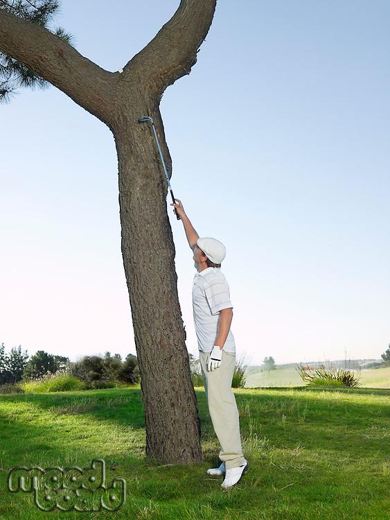 Golfer retrieving ball from tree