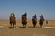 MN253 Camel race