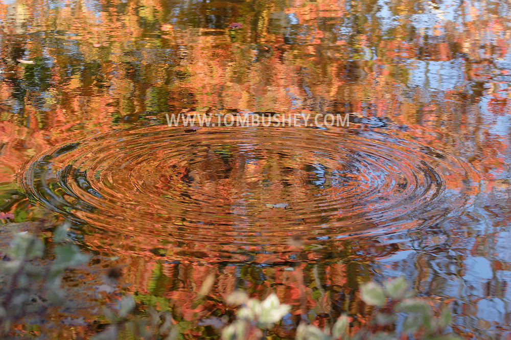 Sugar Loaf, N.Y. - Circular ripples spread out on the surface of a pond showing the reflection of colorful maple leaves still on the trees on Oct. 9, 2006.