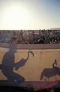 """Voluntario dentro de un """"corral"""" manipulando un pollo de flamenco para su anillado."""