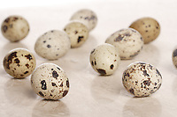 Quail eggs - studio shot